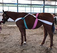 ボディラップされている馬の写真