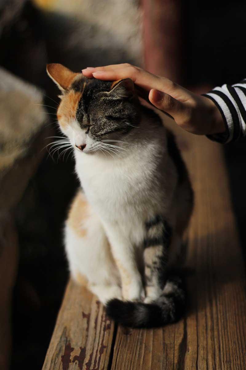 撫でられる猫の写真