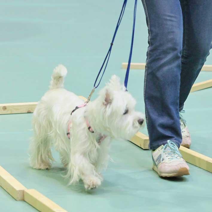 コミュニケーションをとりながら歩いている犬の写真