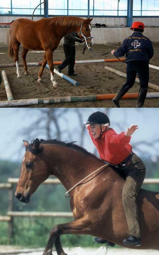 人と馬の写真