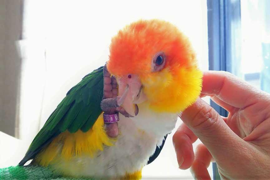 小鳥に触れている写真